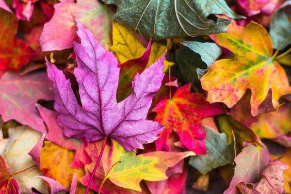 Herbst in Preungesheim